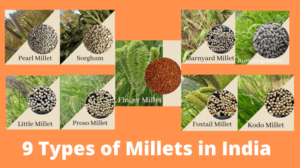 Nine types of millets